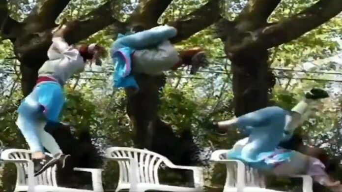 Viral girl climbing tree